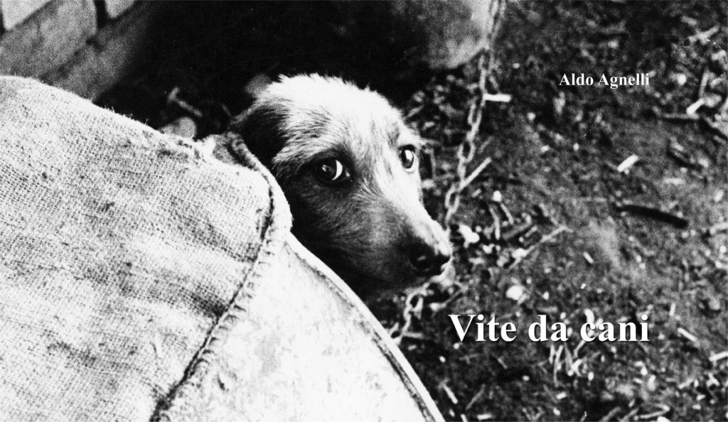 Vite da cani